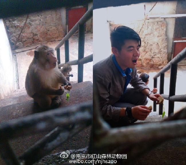 南京红山动物园饲养员模仿动物拍照萌翻网友(组图)