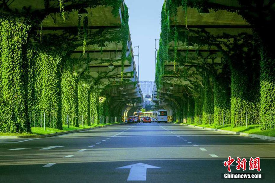 成都二环路高架水泥桥墩变身 绿色长廊 高清组图