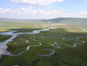 甘肅甘南:美麗濕地 生態畫卷