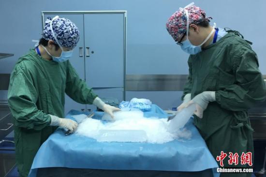 資料圖:器官移植中心的醫護人員在手術室裡緊鑼密鼓的準備著。
