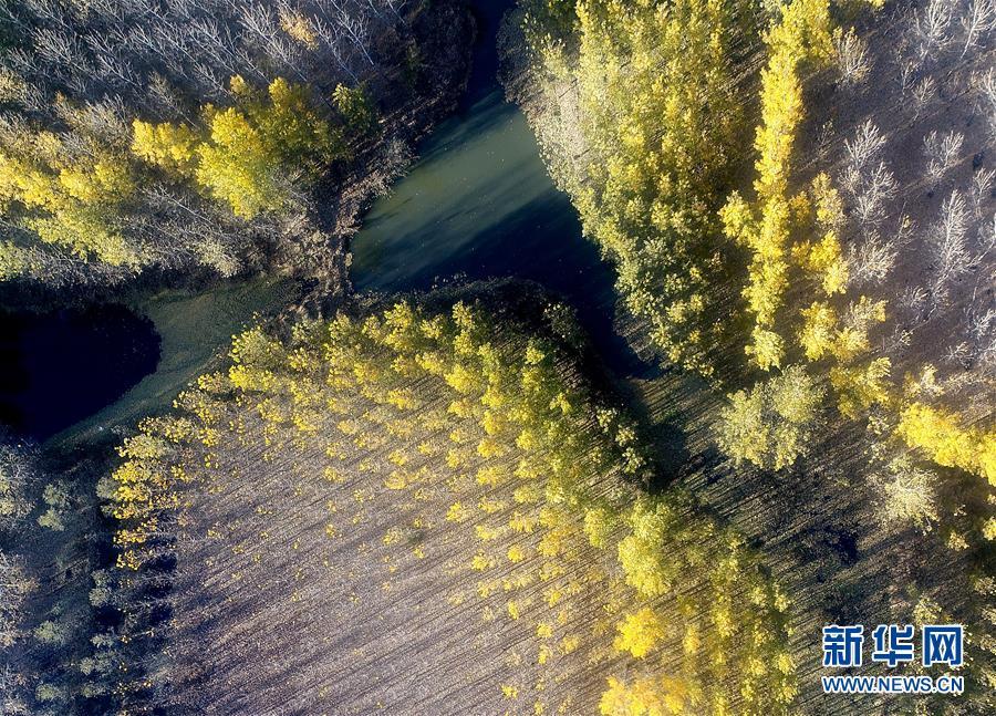 (環境)(1)水庫防護林美景如畫