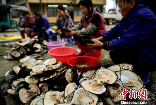 江西萬年:珍珠產業幫農民走上致富路