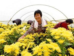 特色農業助力精準扶貧
