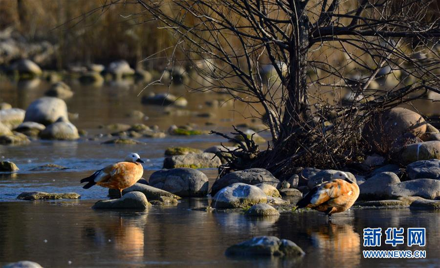 冬日淇河湿地美 高清组图