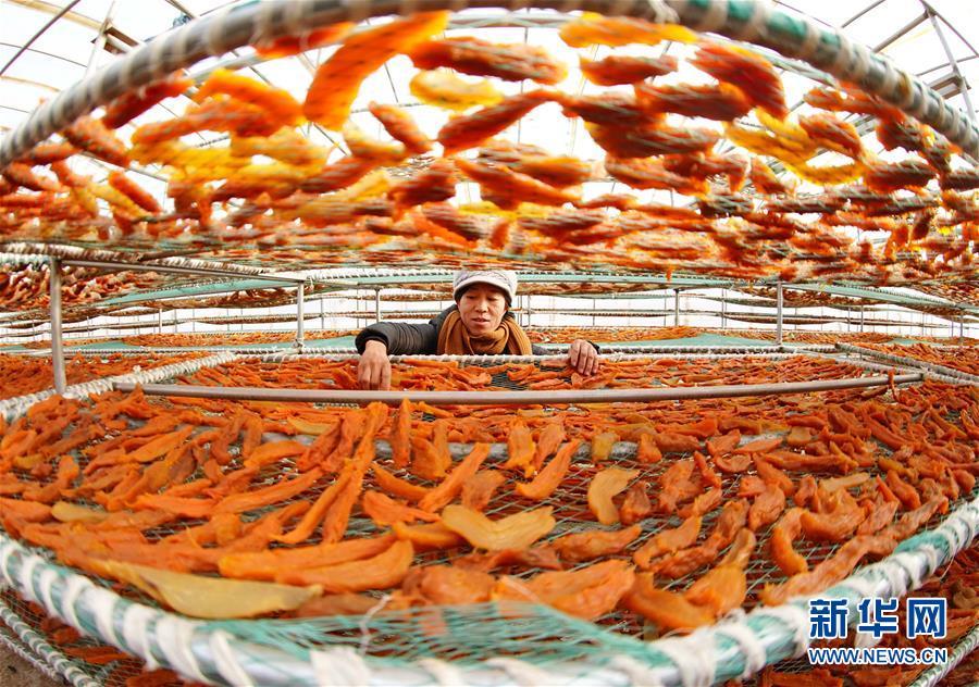 (經濟)(1)河北盧龍:鮮食甘薯深加工促增收