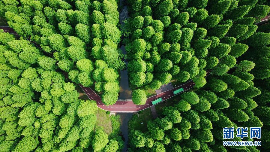 #(生態)(1)江蘇黃海國家森林公園美如畫