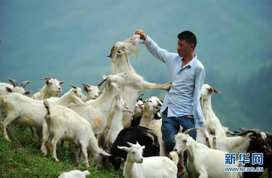 """(图片故事)(1)""""独臂羊倌""""自强创业"""