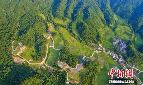 永平鎮籮鬥坑森林人家。 賴太祿 供圖