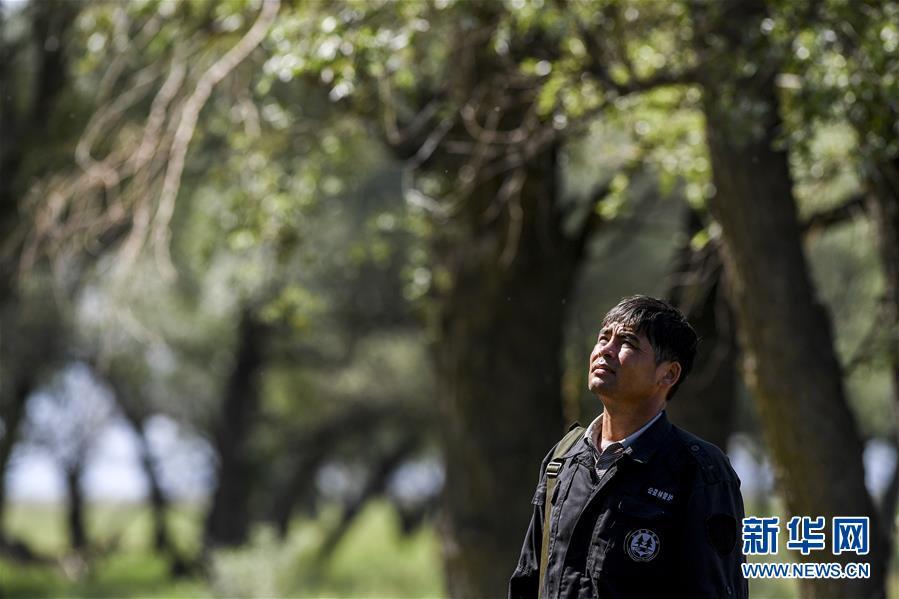 (圖片故事)(1)堅守在庫魯斯台草原腹地的護林員