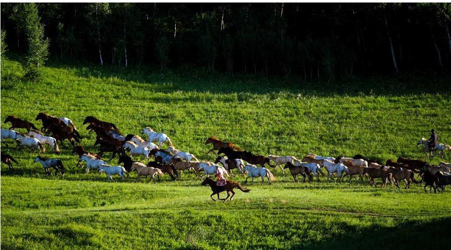 草原 白马,诗和远方
