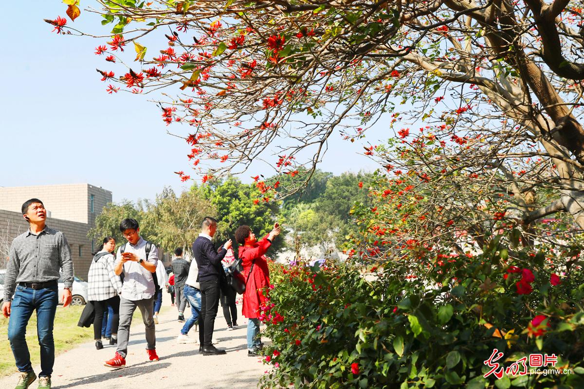 新春走基层:漳州东山岛花团锦簇旅游热