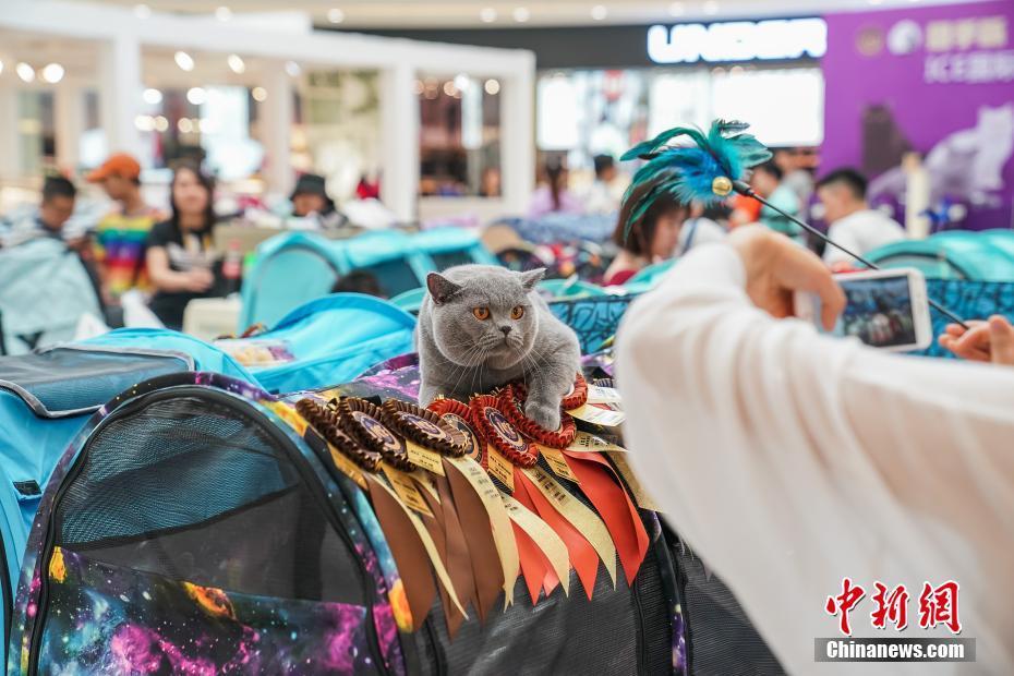 【企业服务理念】广西南宁一商场举行纯种猫选美比赛