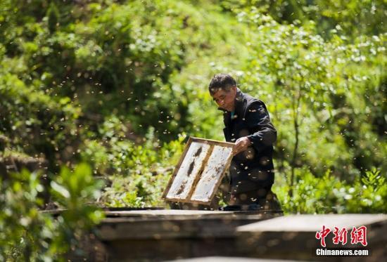 皇冠正网APP:2019京台标致城市论坛:加强两岸合作 鞭策养蜂财富休闲农业生长(图)